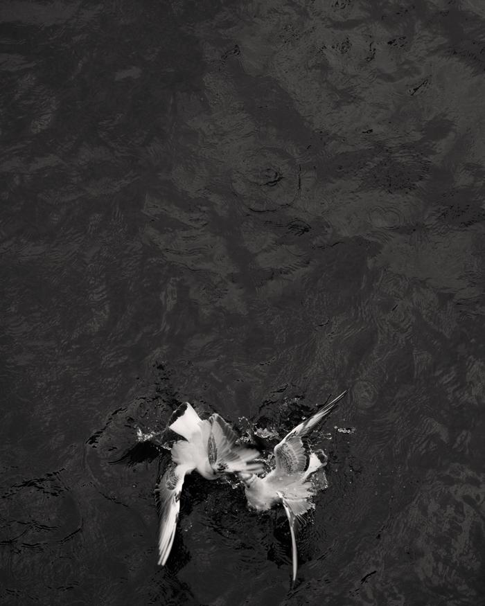 © Loredana Nemes – Greed #03, April 2014