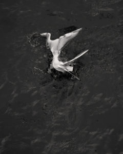 © Loredana Nemes – Greed #07, April 2014