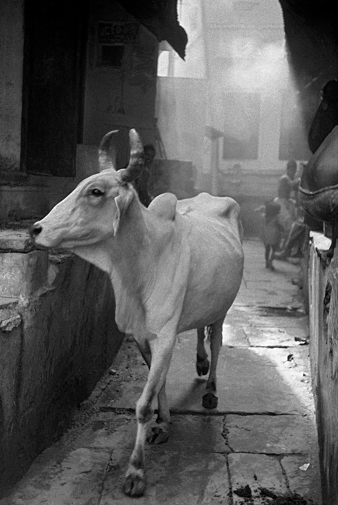 © Frank Horvat - Cow in the bazaar, India, 1953, Courtesy KLV Art Projects