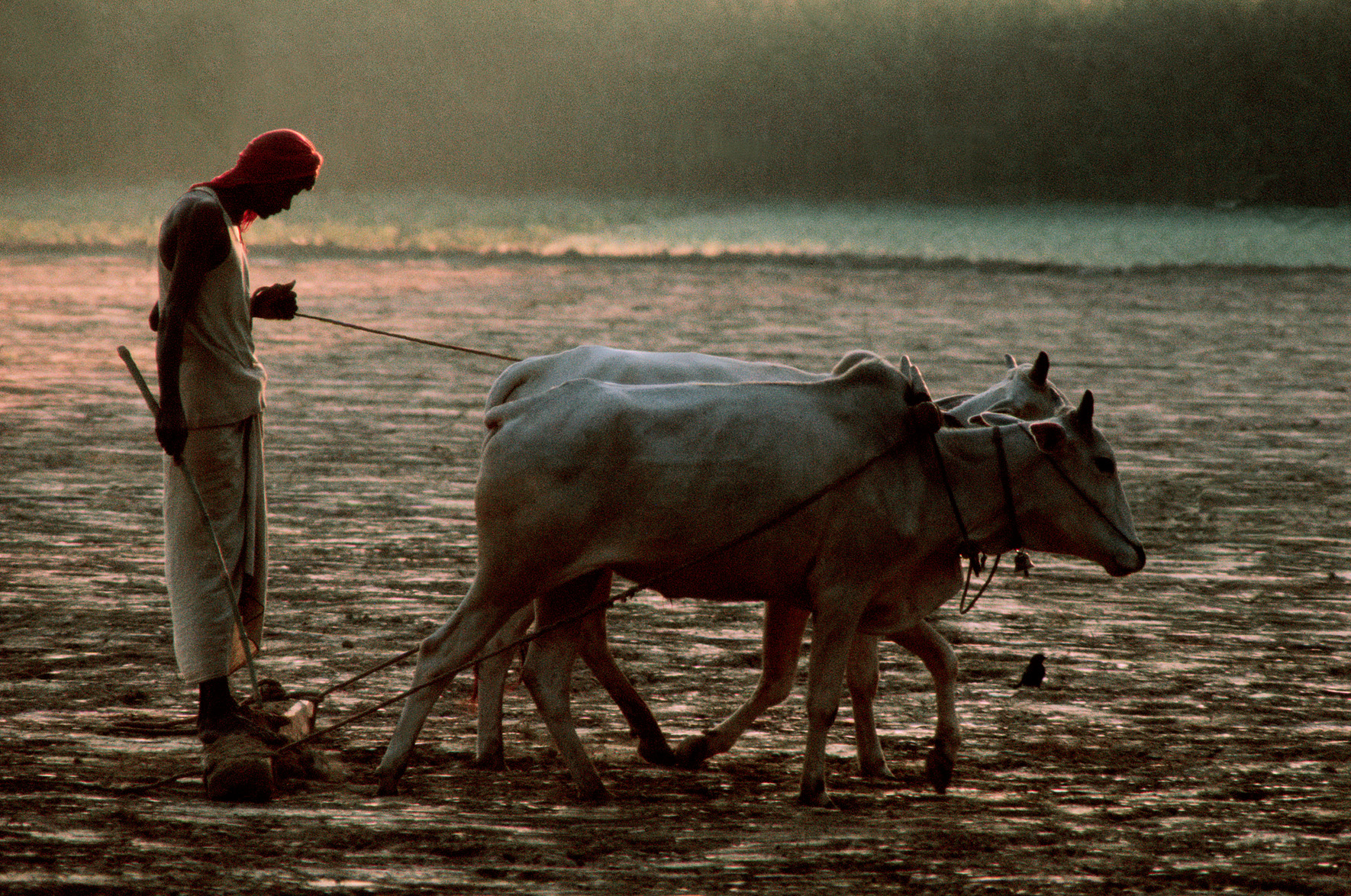 © Frank Horvat – Plough, India, 1975, Courtesy KLV Art Projects